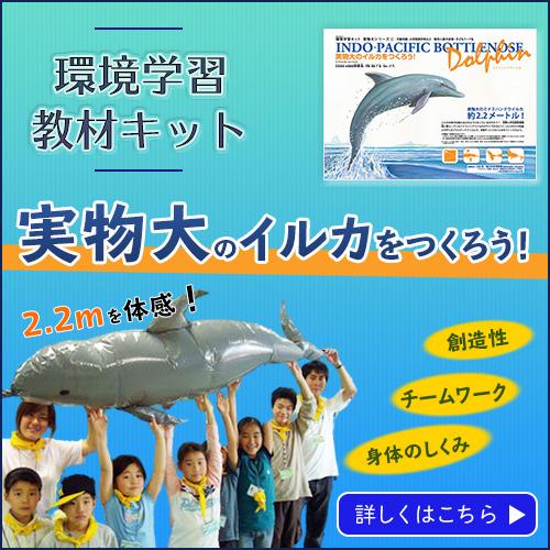 実物大のイルカを作ろう学習キット